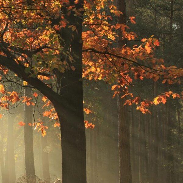 'Deze herfst is anders dan anders'