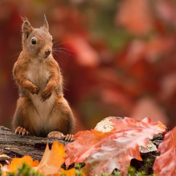Ben jij een herfsthater of herfstminnaar?