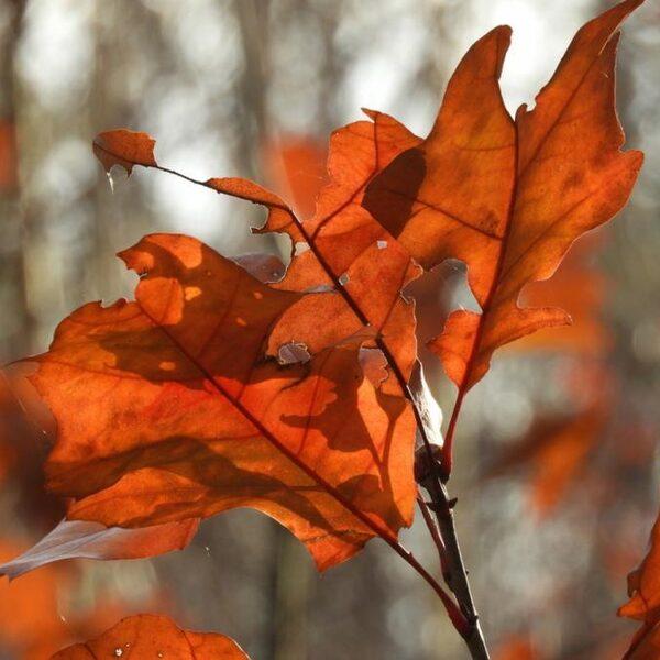 Wij-bos is voor iedereen: 'Natuur is geen links of rechts verhaal, er is één aarde'