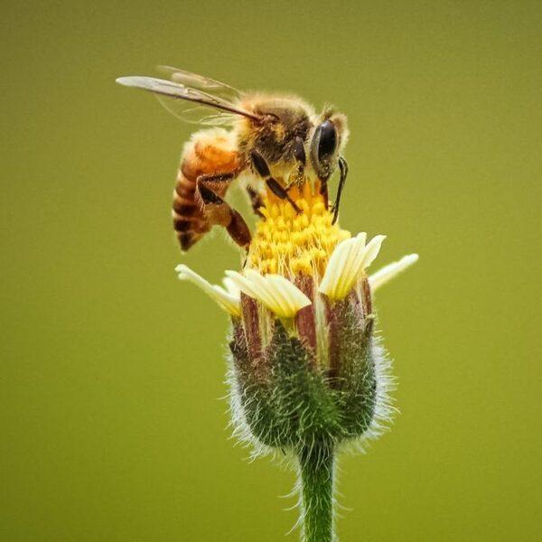 Niet maaien in mei: zo kun je bloemen en insecten een handje helpen