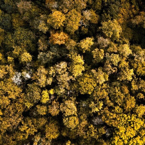 Staatsbosbeheer zit met groot bomentekort