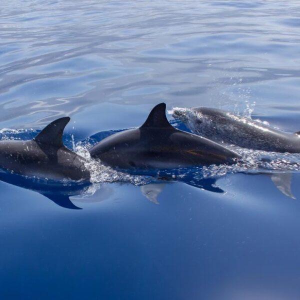 Zwemmen met dolfijnen kan echt niet meer