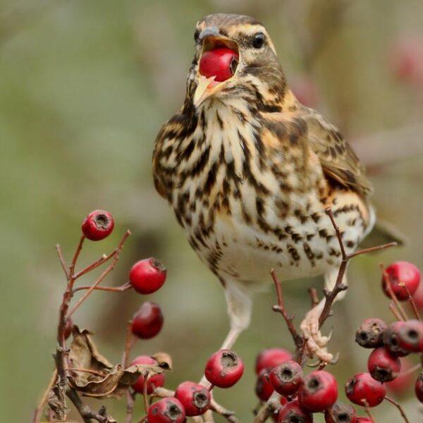 'We hoeven niet bang te zijn dat vogels massaal het loodje gaan leggen'