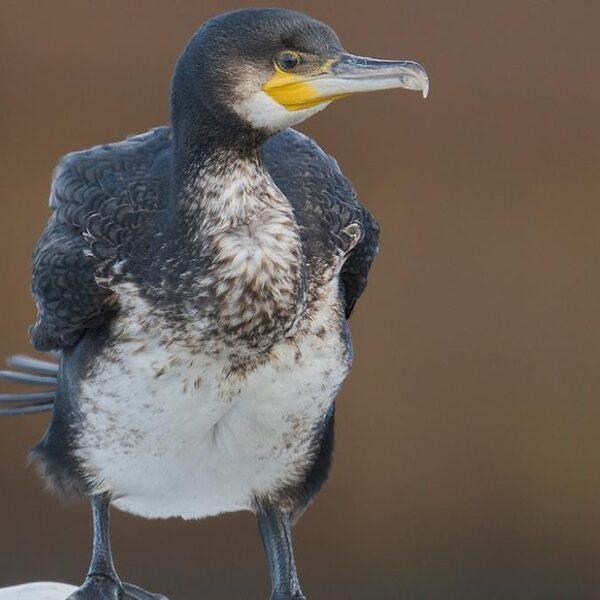 Vogelgids voor beginnende vogelaars: zo kun je gemakkelijk gevederde vrienden herkennen