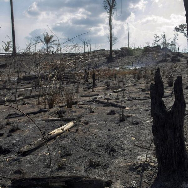 Brazilië weigert G7-geld voor Amazone-branden