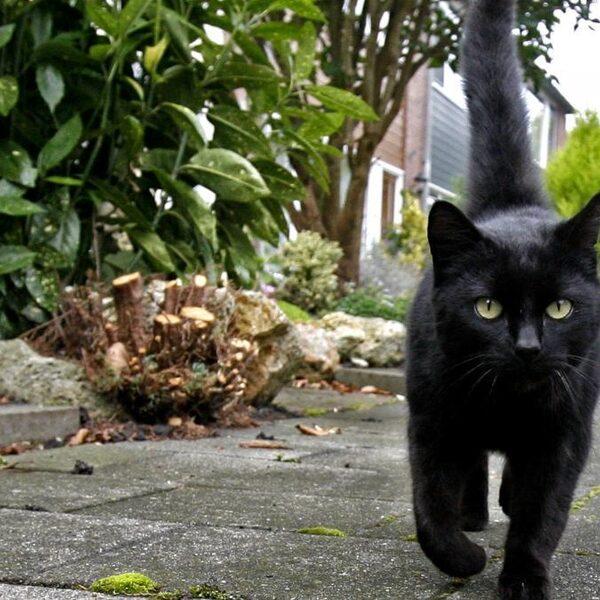 'Huiskatten naar buiten laten is illegaal'