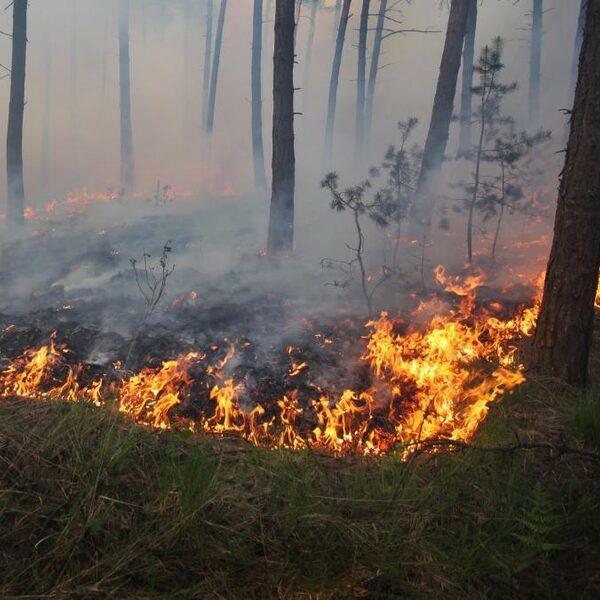 Opnieuw meer bosbranden, meestal veroorzaakt door de mens