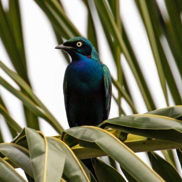 Vogels in Benin en natuur in Noorwegen: Vroege Vogels gaat de wereld over