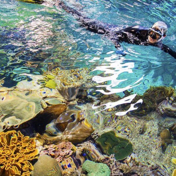 Nederlands koraal geeft hoop voor andere koraalriffen