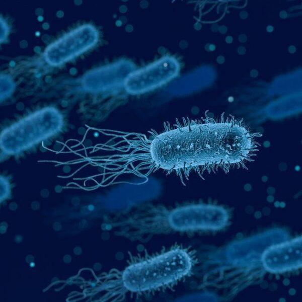 Met deze bacteriën kun je CO2 uit de lucht halen