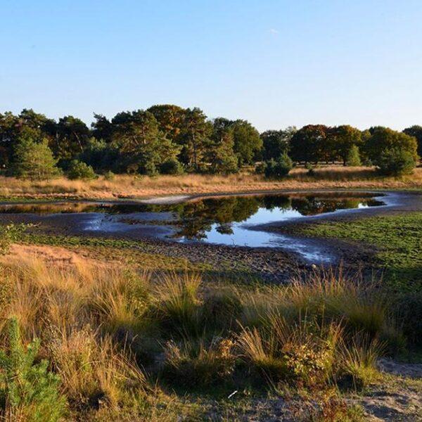 Natuur zucht onder enorme droogte: hoe lossen we droogtecrisis op?