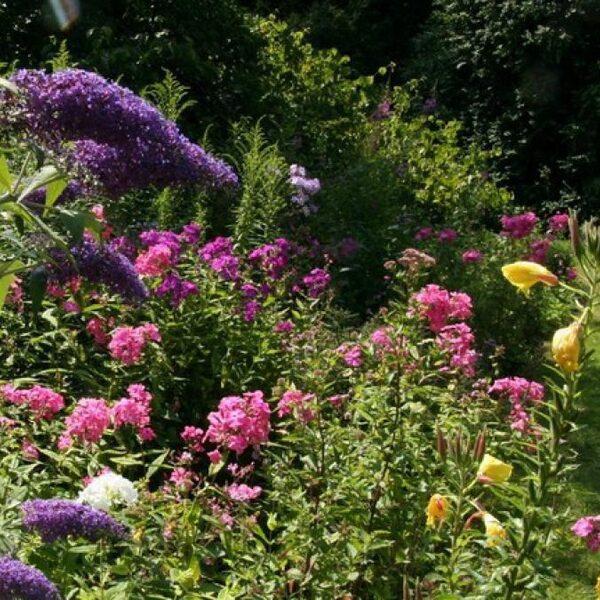 Met deze planten maak je van je tuin een paradijs voor insecten