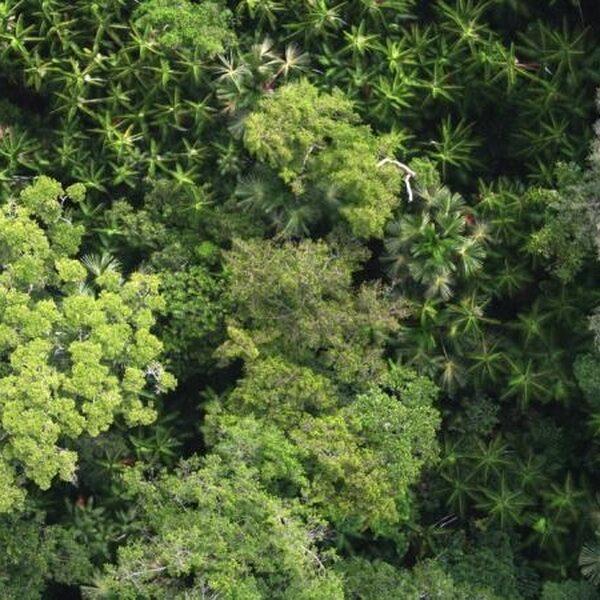 Mens beïnvloedt Amazonegebied al duizenden jaren