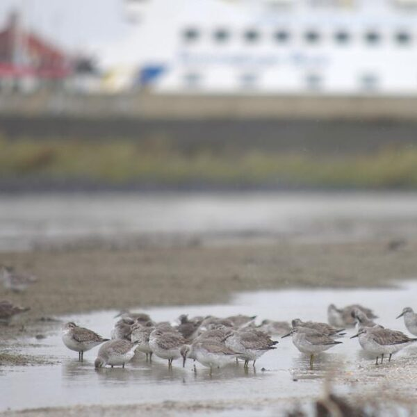 Zoutwinning onder Waddenzee is in strijd met vergunning