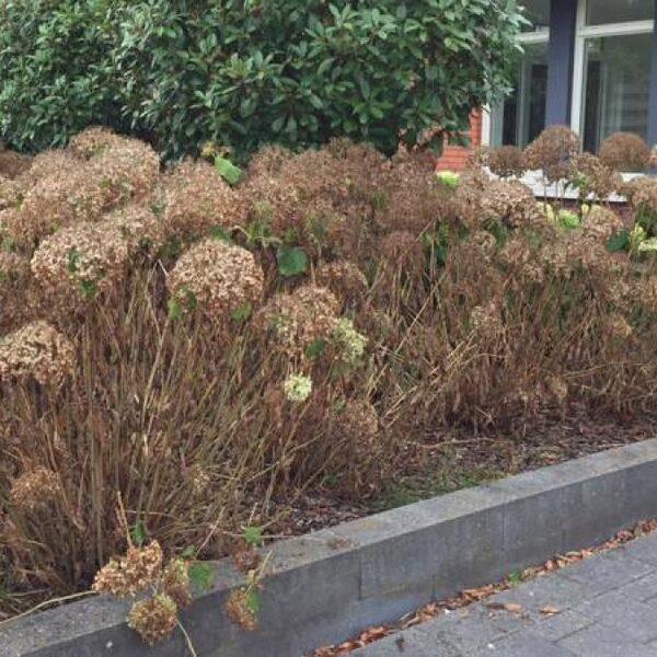 Lijken je tuinplanten dood door de droogte? Gooi ze nog niet weg
