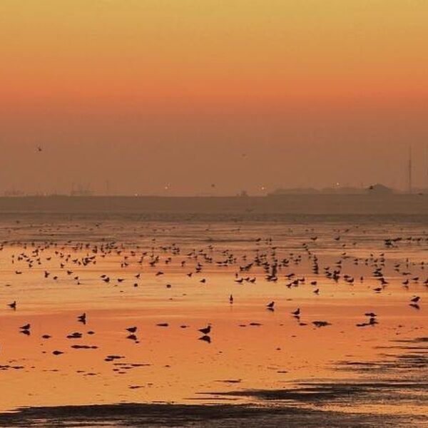 Groen licht voor zoutwinning in Waddenzee