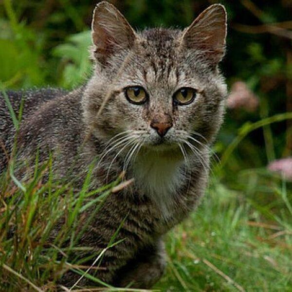 Alle huiskatten verplicht steriliseren of castreren