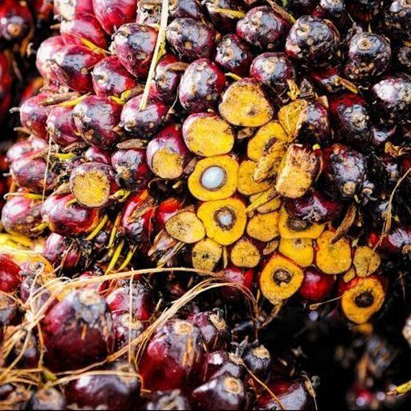 Hoe duurzaam is duurzame palmolie?