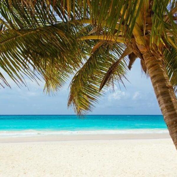 Armoede achter de Caribische palmbomen
