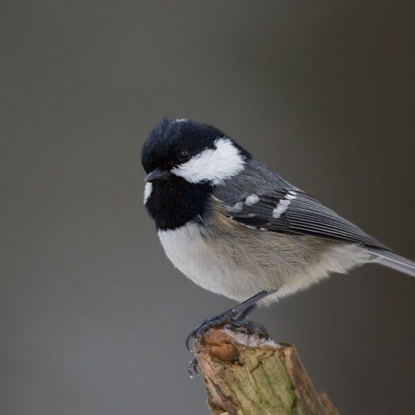 Vogels herkennen is moeilijker dan je denkt