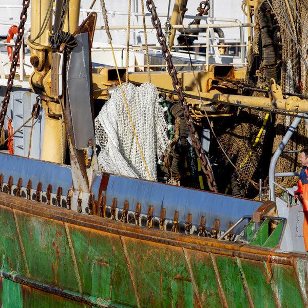 Nederland verzweeg informatie voor EU om pulsvisvergunningen