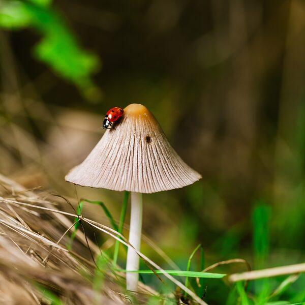 Biodiversiteit gaat hard achteruit, dus goede afspraken zijn essentieel