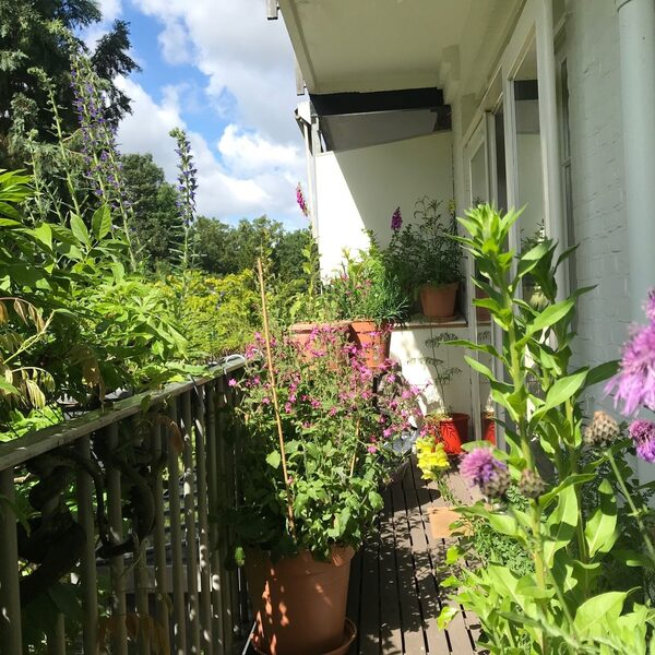 Balkon omtoveren tot bijenparadijs: Caspar Janssen deed het