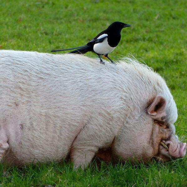In nieuwe Dierenwet staat dierenwelzijn centraal