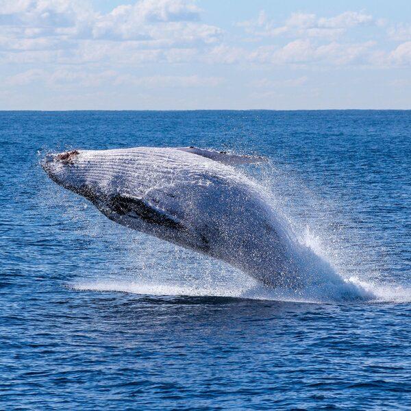 Lawaai onder water is funest voor walvissen