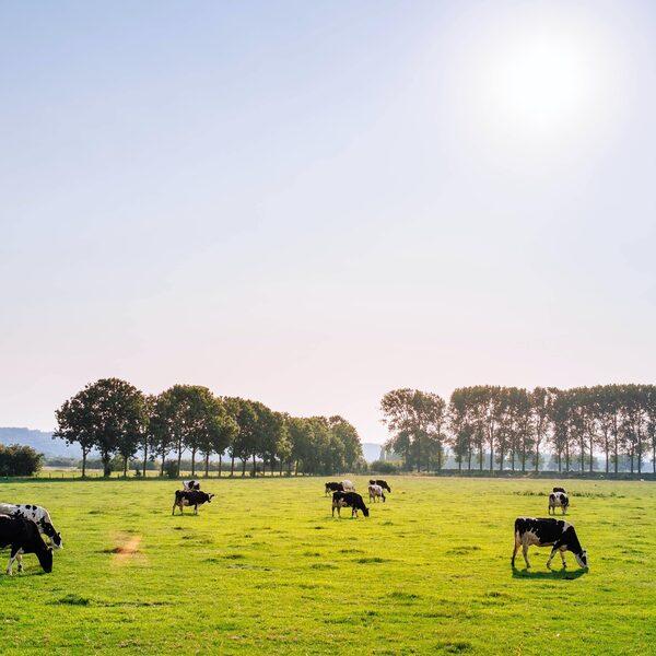 Nederland moet van het slot: 'Dat betekent dat je stikstofruimte moet creëren'