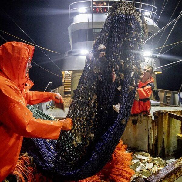 Podcast De Dag: de pijn van de Nederlandse pulsvissers